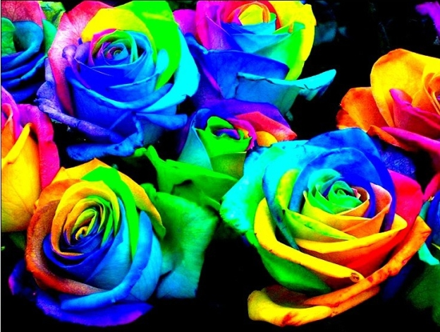 learn-how-to-make-simple-colored-and-rainbow-roses-step-by-step-diy-project-e1492902890380.jpg